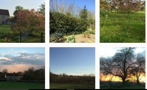 Annexe Yew Tree Cottage garden