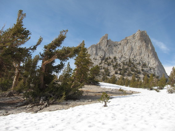 Whitebark Pine and Cathedral Peak