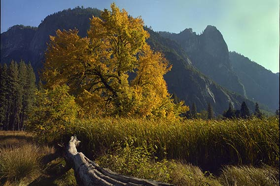 Yosemite_Valley_Golub
