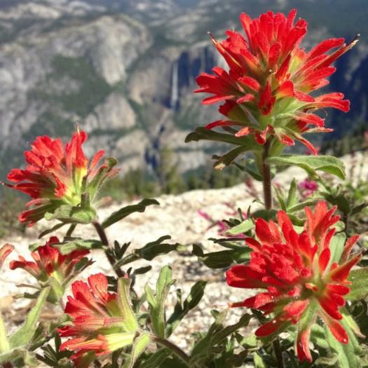 Yosemite_Falls_Paintbrush_DeGrazio