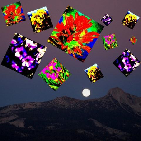 yosemite_wildflower_fireworks_degrazio