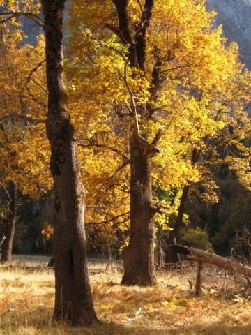 TwinOaks_Yosemite_DeGrazio