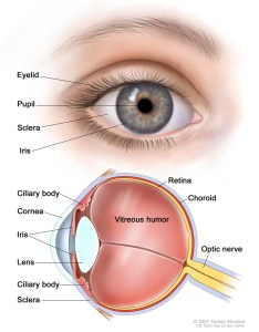 Alt also eye diagram of the diagrams human rh ygraph