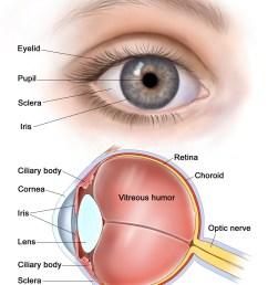 eye diagram diagram of the eye eye diagrams human eye human official eye chart eye chart diagram [ 1236 x 1600 Pixel ]