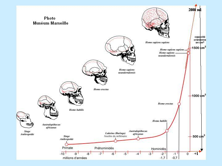 diagram of evolution timeline waterfall formation a brain human the origin alt