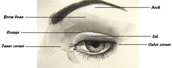 Eye Map Eye Makeup Map Eye Parts Lid Outer Corner Arch