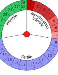 Source wiki menstrual cycle alt also period chart fertility diagram calendar rh ygraph