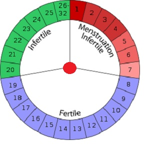 menstrual cycle diagram with ovulation 99 cherokee radio wiring period chart fertility calendar subscriptions