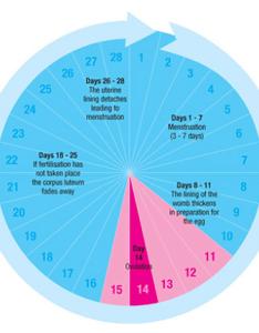 Menstrual also cycle period chart fertility diagram calendar rh ygraph