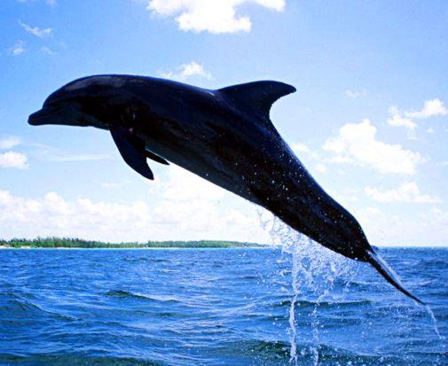 中國民間傳說中關於海豚的說法