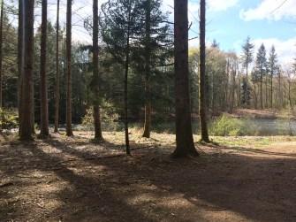 Le lendemain, un footing tranquille pour profiter des bois ensoleillés
