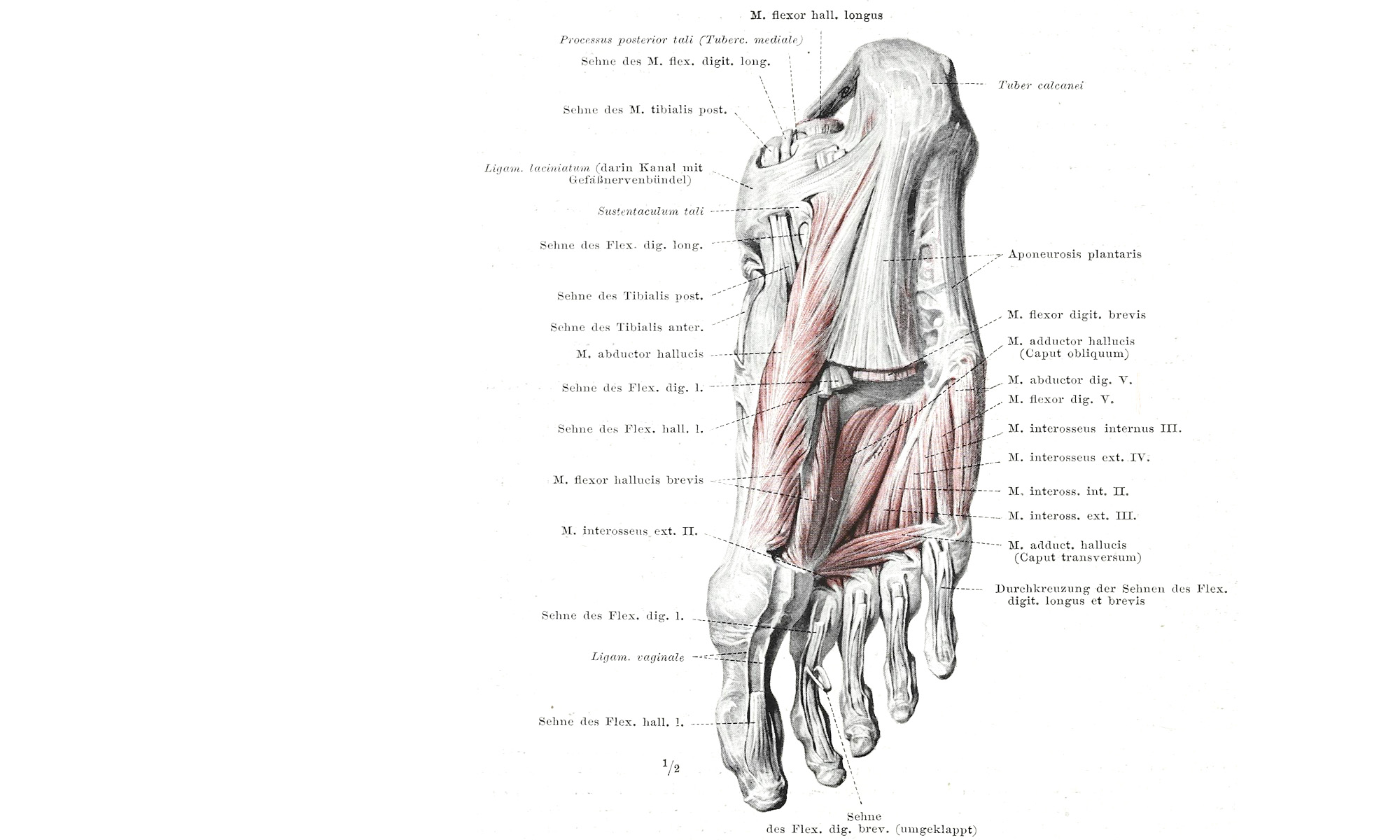 hight resolution of plantar fasciitis yin yoga supporting healing