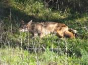 sleeping in the shade