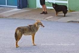 approaching a dog