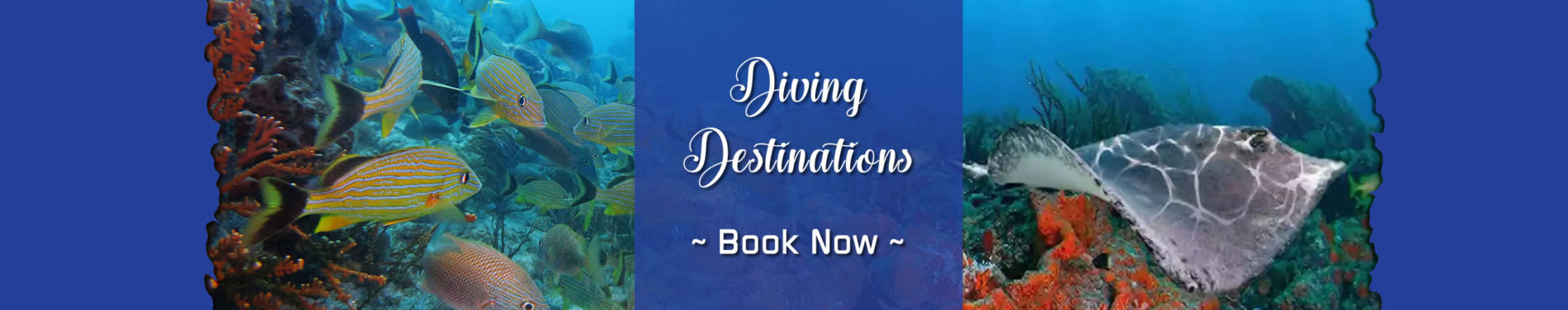 YKnot Key West Charters - Diving Destinations