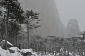 Лес и нижняя часть стены Шаан-Каи