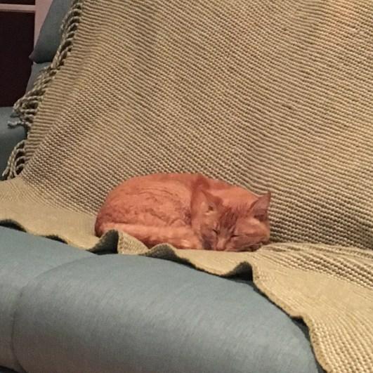 His name's Garfield!