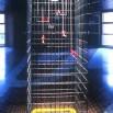 cage-btp