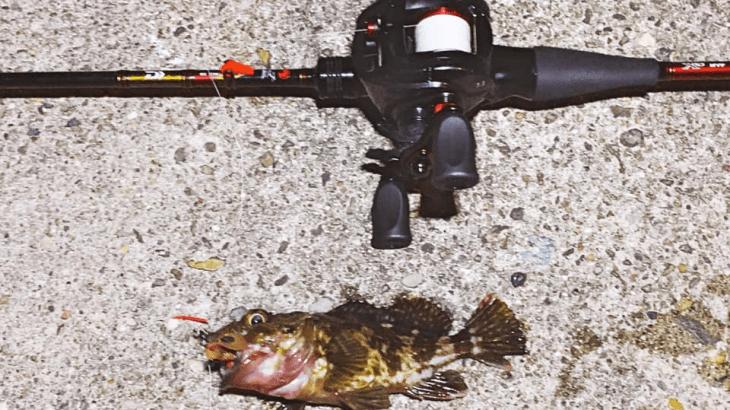 【SWベイトフィネス】釣っても釣ってもジャミラばっかし。