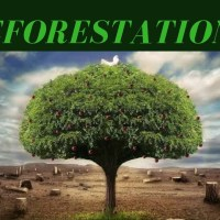 Deforestation ( meaning, causes, effects and solution)