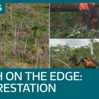 Earth on the Edge: How the global deforestation crisis is affecting us all right now | ITV News