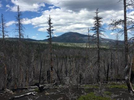 Part of the Pole Creek Burned Area