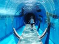 水族館と少女