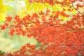 南禅寺に子連れで行くときの紅葉の見ごろの時期やスポット