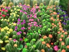 De faux cactus.