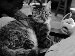 Le chat très calin