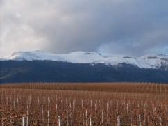 Les vignes et le Jura