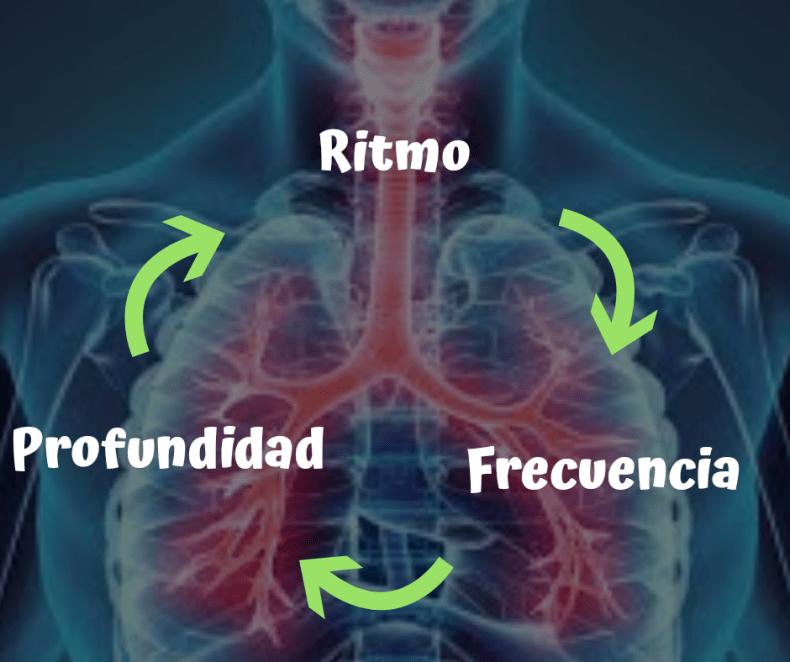 Frecuencia Respiratoria características