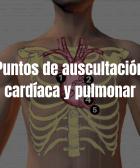 Puntos de auscultación cardíaca y pulmonar