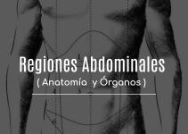 Cuadrantes abdominales (anatomía, órganos)