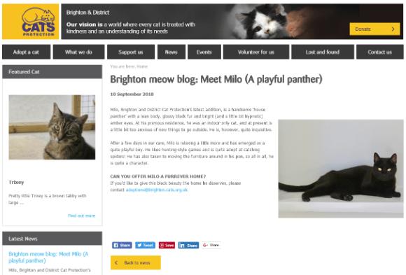 brighton-cat-news Theme Builder Layout