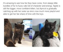 delightful-kittens-250x206 Jono reviews: Cats Protection