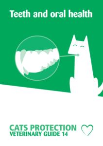 teeth-pdf-212x300 Theme Builder Layout