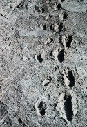 laetoli_footprints