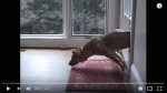 MUST WATCH: Dogs Who Just Fail