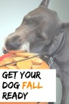 5 Ways to Get Your Dog Ready for Fall