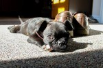 Top 3 Cute, Small Dog Breeds