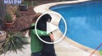 VIDEO: Dogs Reunited with Owners   Try Not to Cry