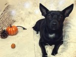 3 Delicious 3-Ingredient Easy Pumpkin Dog Treats for Fall
