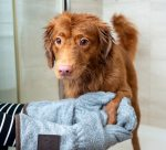 Top 5 Tips to Keeping Your House Clean with a Dog