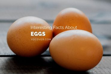Interesting Facts About Eggs