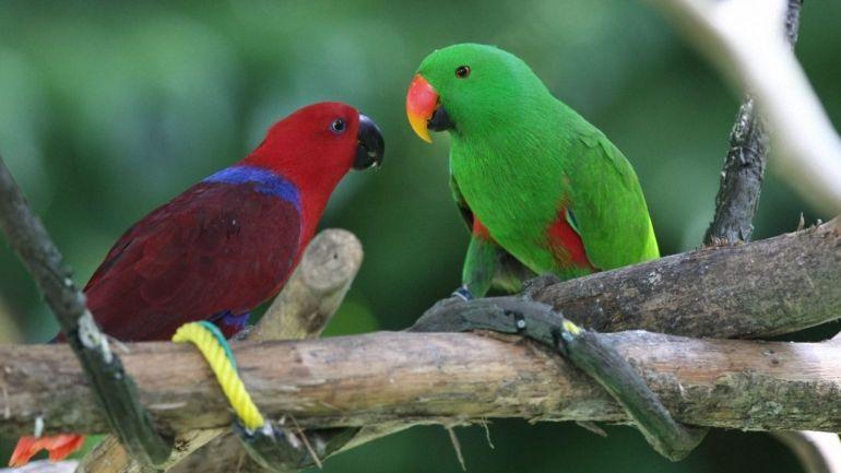 facts about quaker parrots