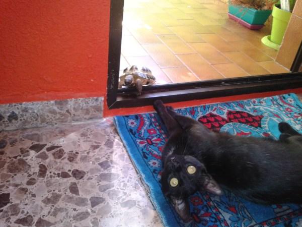 tortuga y gato amigos