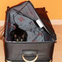 Los gatos y las maletas - Qué hacer cuando te vas de viaje