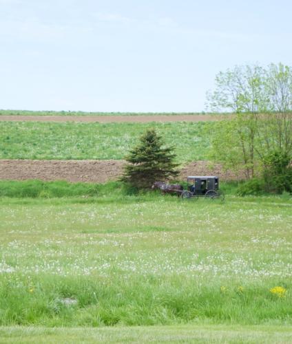 buggy3-crop