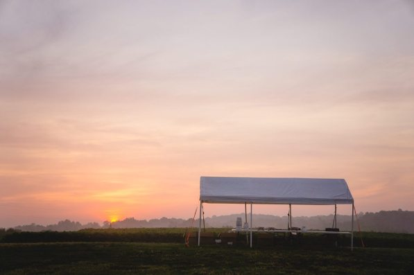 """The """"check-in and check-out"""" canopy by the strawberry patch..."""